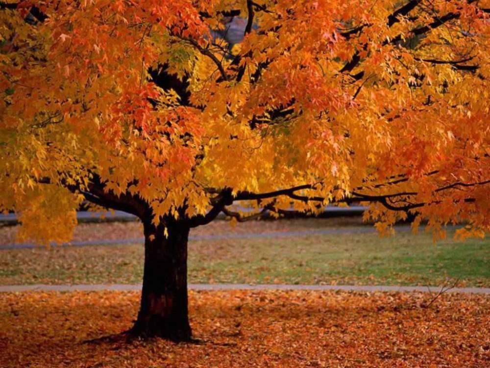 Autumn's Annual Abashment