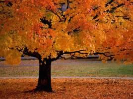 fall+pic